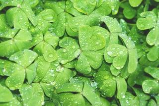 four leaf clover quentin-rey-8846-unsplash.jpg